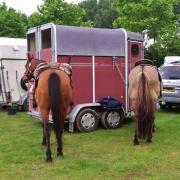 Fautras Provan 2-paards trailer met vooruitstap