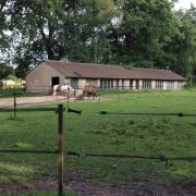 Paddock met schuilstal en weidegang pony