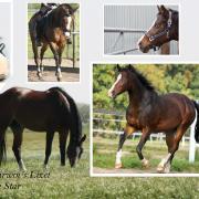 Gezocht super lieve leuke pony d of e ras maakt niet uit