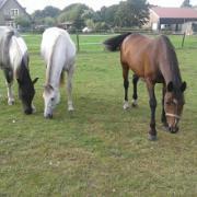 bijrijder/ verzorg(ster) gezocht voor e-pony