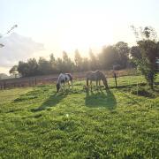 Allround paard gezocht