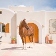 Zon, zee en geweldige paardenvakantie!