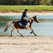 Mooie bonte d pony