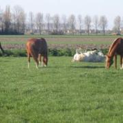 gezocht lieve betrouwbare e pony