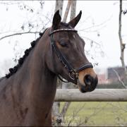 Pony met enorme potentie uit kampioenslijn
