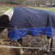 Nieuwe Pagony outdoor winterdeken 400 grams