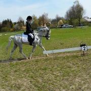 B pony voor halve stal/bruikleen