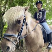 Verzorg pony gezocht // omgeving Apeldoorn