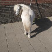 2 leuke pony's zoeken verzorger/menner