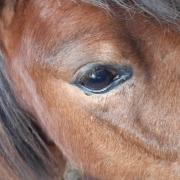 Gezocht: brave, stoere, grote a- pony MERRIE