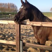 lieve 10 jarige allround d pony te koop