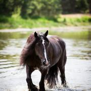 Fotoshoot in het water bij herpenduin!! Hond/Paarden