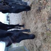 Gezocht weiland 2 paarden