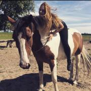 Gezocht: E-pony of kleine maat paard