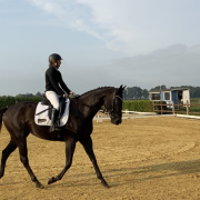 Gezocht bijrijdpaard of pony