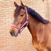 Verona D Allound sport paard