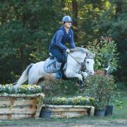 5 jarige Welsh pony te koop