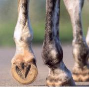 Gezocht! (Pony's) voor bekappen