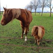 Mini paard met gebruiksaanwijzing