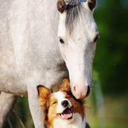 Dierentolk/ communicatie met dieren