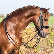 Profi-Rider Hoofdstel Stang & Trens