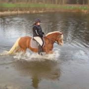 Verzorg pony