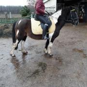 super brave kinder pony