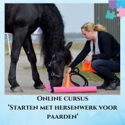 Online startcursus Hersenwerk voor Paarden