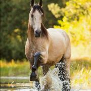 Gezocht!! Valkkleur Pony of Paard