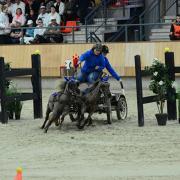 Jonge (men) pony gezocht