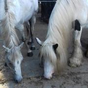 2 pony's incl toebehoren