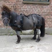 Luxe nylon trainings mentuig voor minipaarden