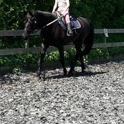 Gezocht: Super brave beginners pony