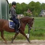 Gezocht: bruikleen/lease paard