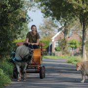 Bijrijdpaard gezocht omgeving Wageningen
