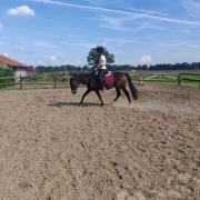 Braaf bereden e pony