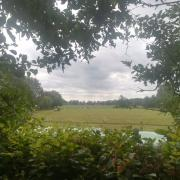 Weidegang met schuilstal in Wapse (Drenthe)
