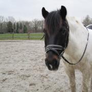 Bijrijder voor D pony gezocht regio Veenendaal