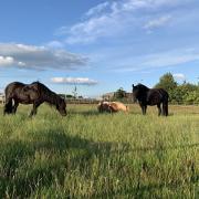 GEZOCHT: Paard of grote pony
