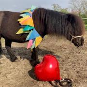 4-jarige Pony zoekt verzorger/trainer