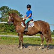 Betrouwbare koffievos E-pony met een prachtige kleur!