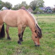 Bijrijder gezocht in Drenthe