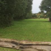 Stalling met weidegang in directe omgeving van bos
