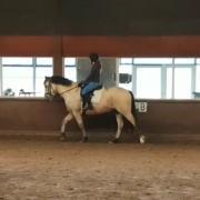 Gezocht: lease D/E-pony