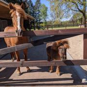 Ervaren bijrijder grote D-pony omg Koudhoorn (gem. Putten)