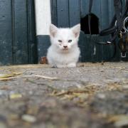 Boerderij kittens zoeken een goed huisje