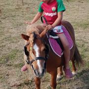 gezocht buitenritten paard
