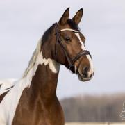 Lieve bonte e-pony merrie