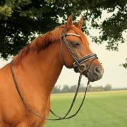 Mooie brave New Forest merrie *weide - coachmaatje