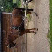 Menpony / D-pony